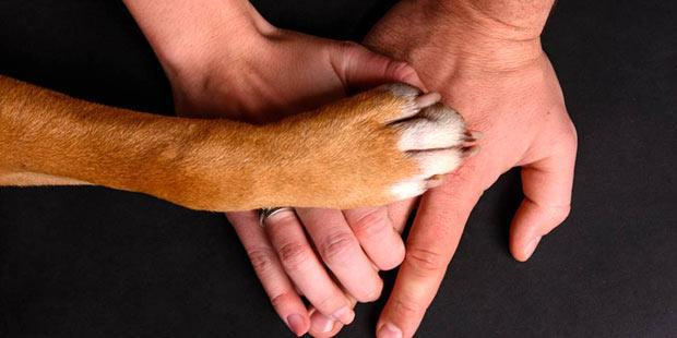 patte de chien sur main d'homme