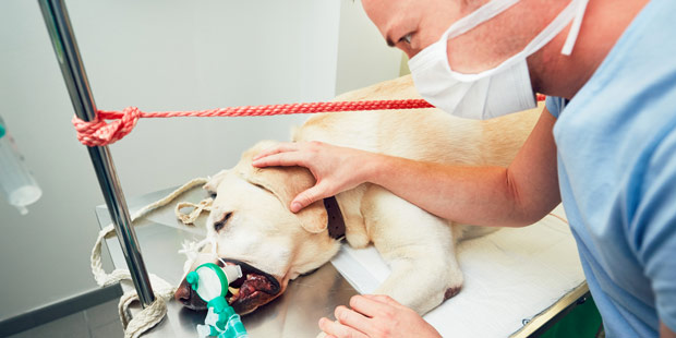 Vétérinaire en exercice libréal