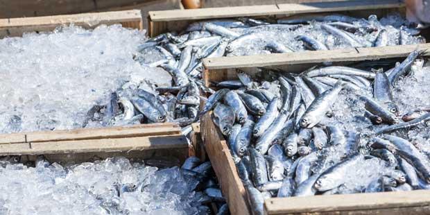 Peche de poissons