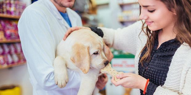 Veterinaire et chien