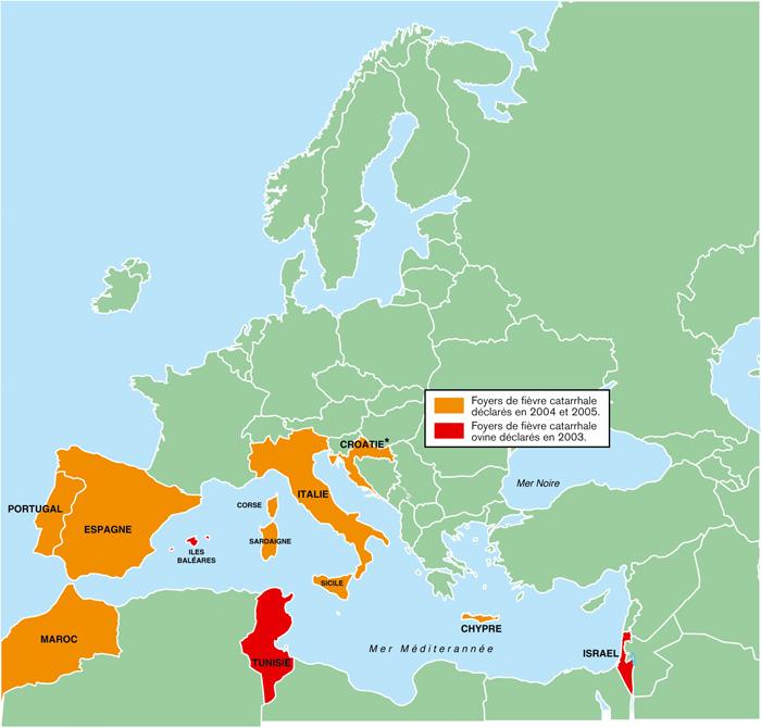 Foyers de fièvre catarrhale détectés dans le bassin méditerranéen à partir de 2003
