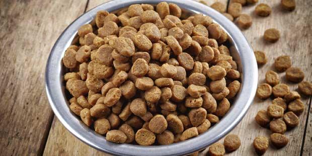 croquettes pour chien et chat