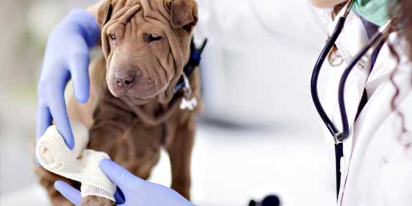 vétérinaire arrive en seconde position