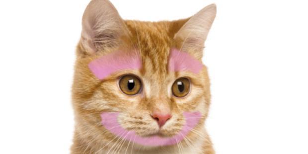zone de caresses prioritaires des chats