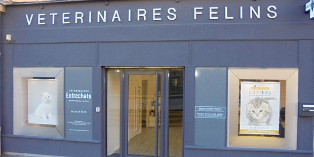Une clinique dédiée aux félins