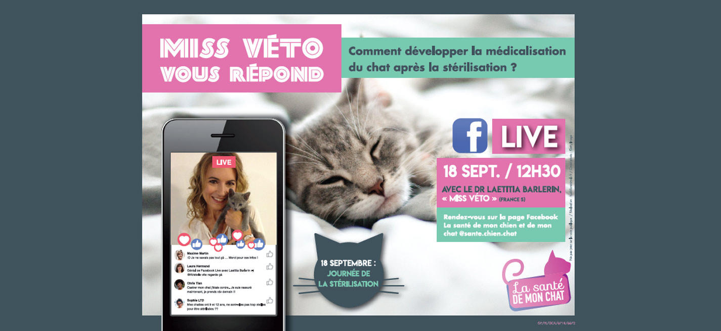 Facebook live stérilisation du chat