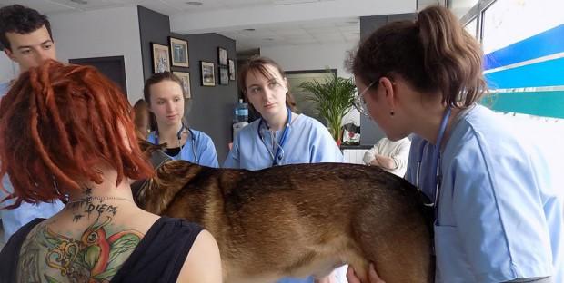 Dispensaire Vétérinaire Etudiant de Lyon