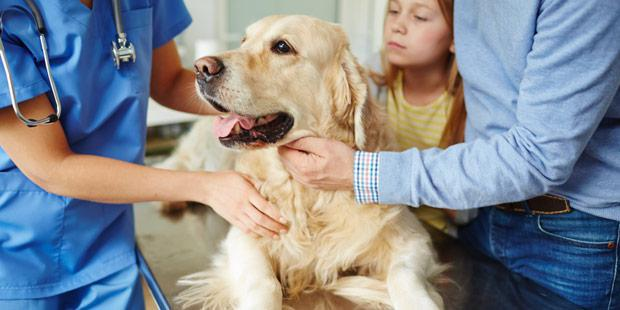 Consultation d'un vétérinaire avec un chien