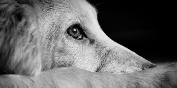 Le rôle du vétérinaire lors de maltraitance animale