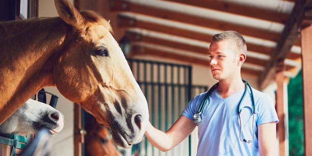 Vétérinaire équin