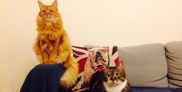 Les chats, un segment porteur en France