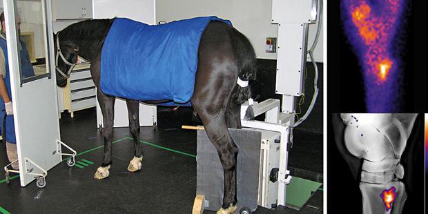cheval, clinique
