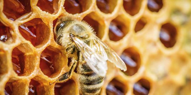 abeille alvéole