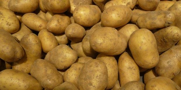 L'amidon de pomme de terre est un vecteur testé dans le cadre de la vaccination contre la toxoplasmose.